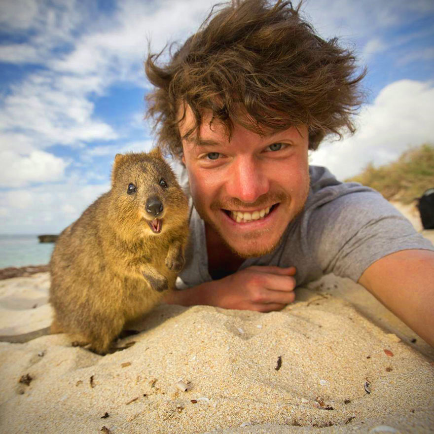 quokka-happiest-animal-selfie